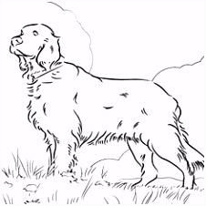 437 beste afbeeldingen van stempel honden in 2018 Drawings Pencil