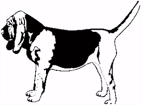 Bloedhonden Honden Plaatjes Animaatjes