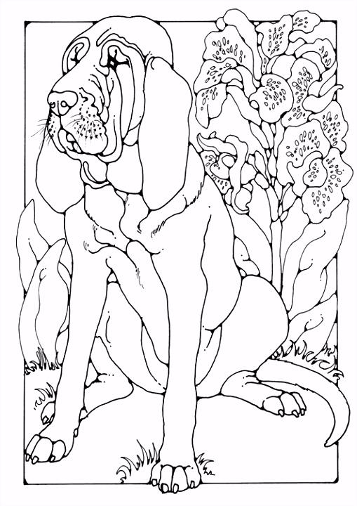 Kleurplaat bloedhond Afb