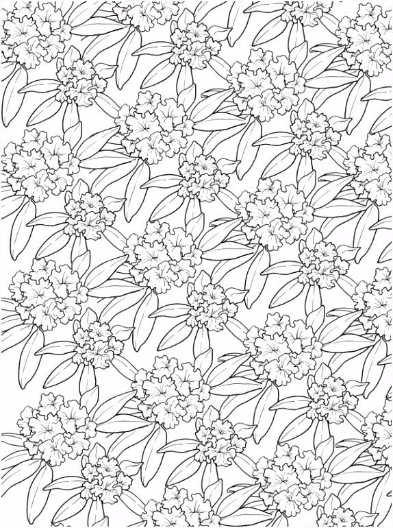 Bloemen Kleurplaat Volwassenen ARCHIDEV