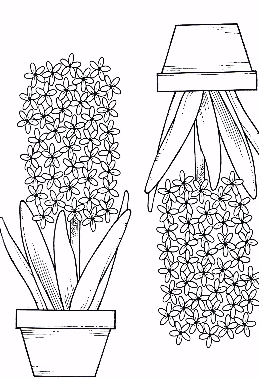 Kleurplaten Boeketten Kleurplaat Hyacint thema Lente S3gk66fad2 Vvprm0yfhm