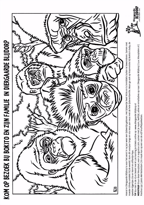 Kleurplaat Diergaarde Blijdorp Gorilla Kleurplaten