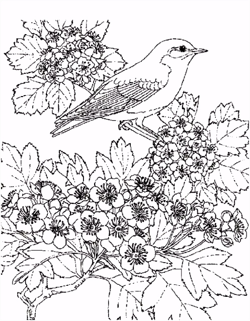 Pin by Michelle Dupuis on Coloring Pages Pinterest