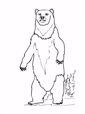 Bruine beer rechtopstaand kleurplaat