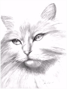 694 best Cats to Color all kinds of cats images on Pinterest in