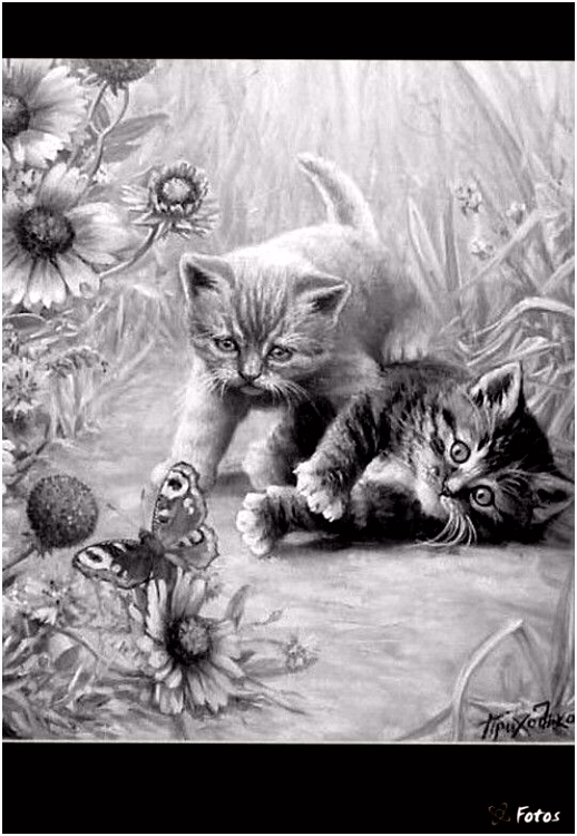 702 best Kitties images on Pinterest