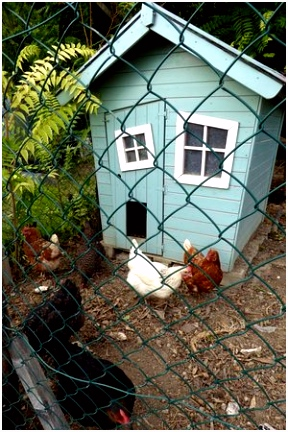 The quirky chicken coup just love it Ask Philippe or Andonis to