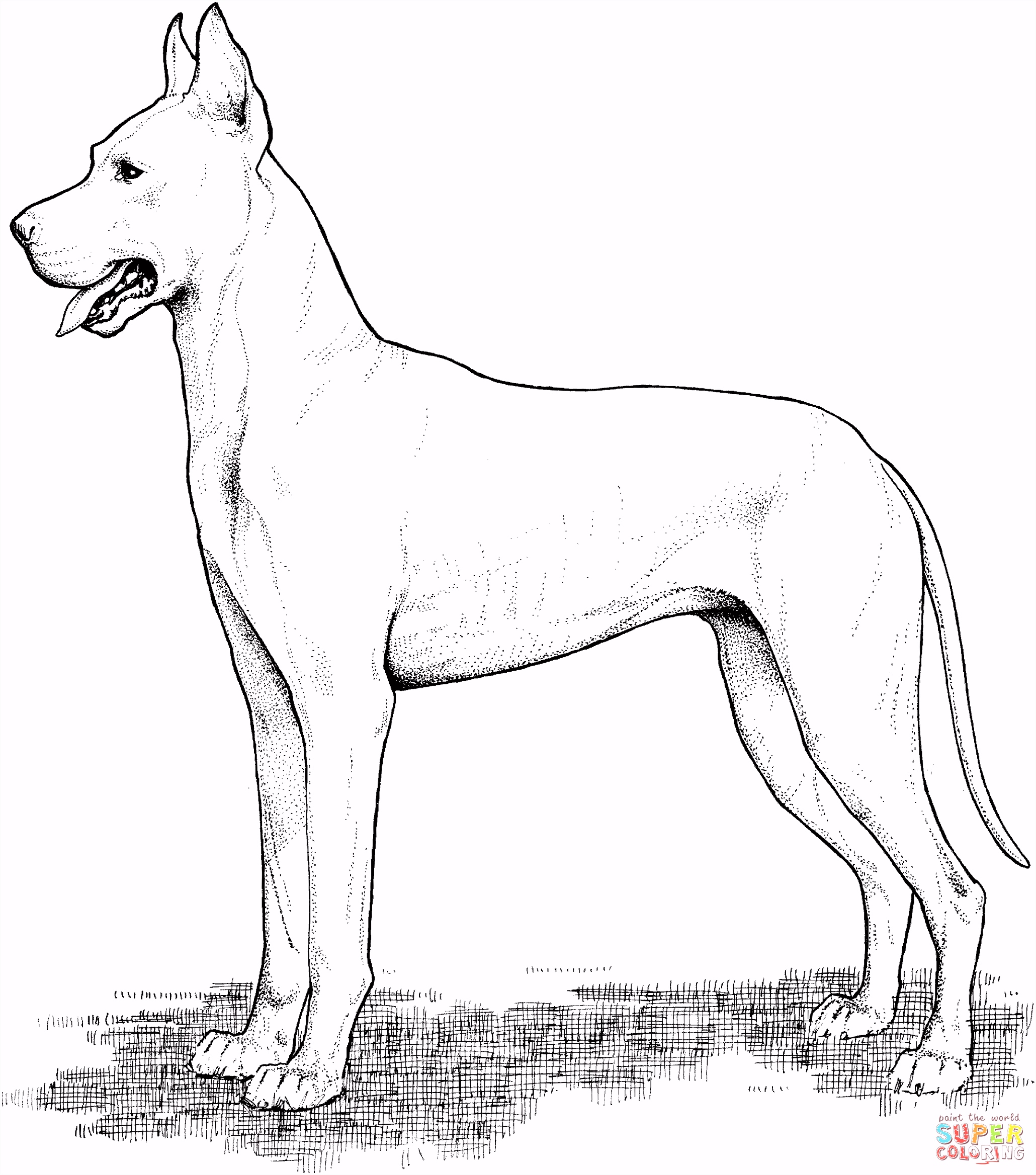Deense dog kleurplaat
