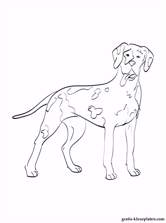 Kleurplaten Duitse dog