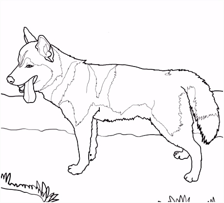 Siberian Husky Dog Coloring page Quilting