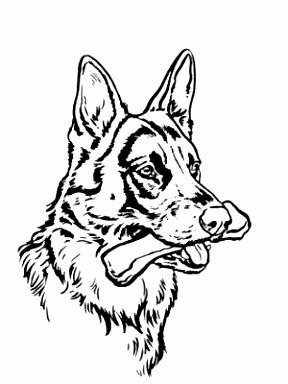 Duitse Herder Kleurplaten Gratis Duitse Herder Kleurplaat – baikanfo