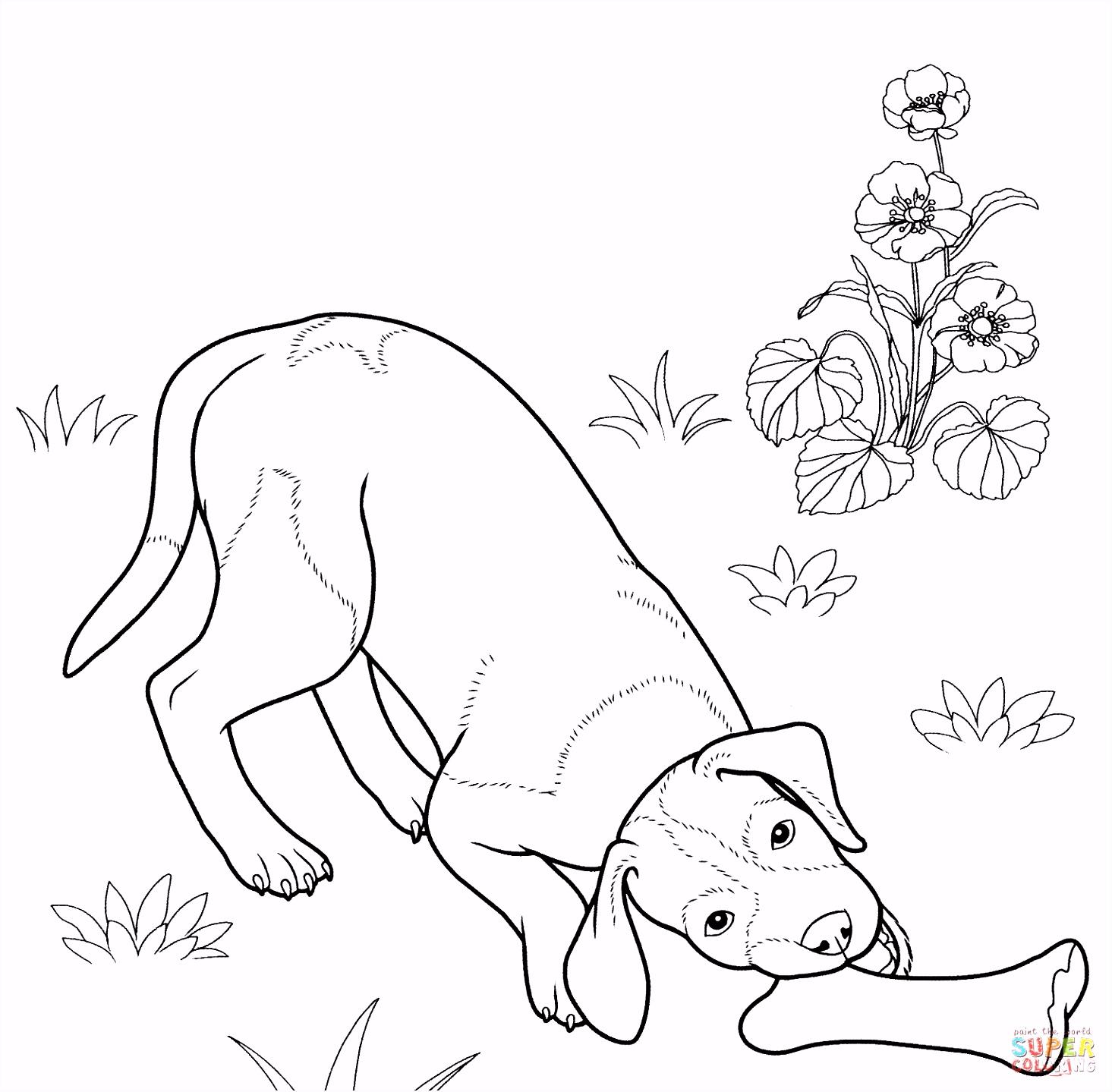 Duitse staande hond kleurplaat
