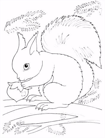 Eekhoorn eet noot kleurplaat