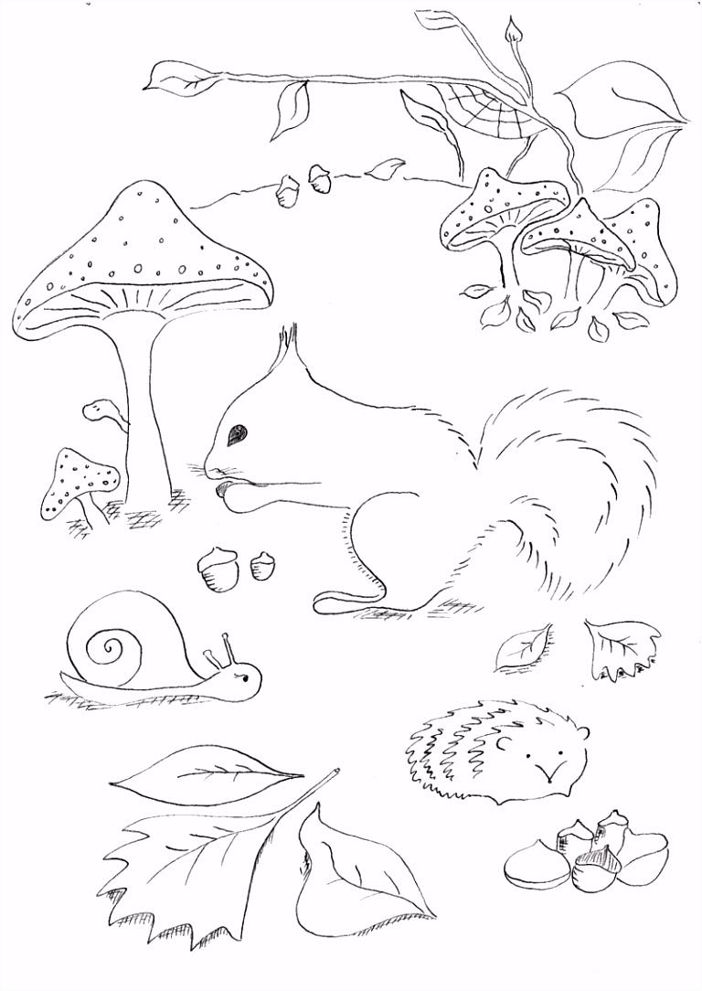 7 kleurplaten eekhoorn sletemplatex1234