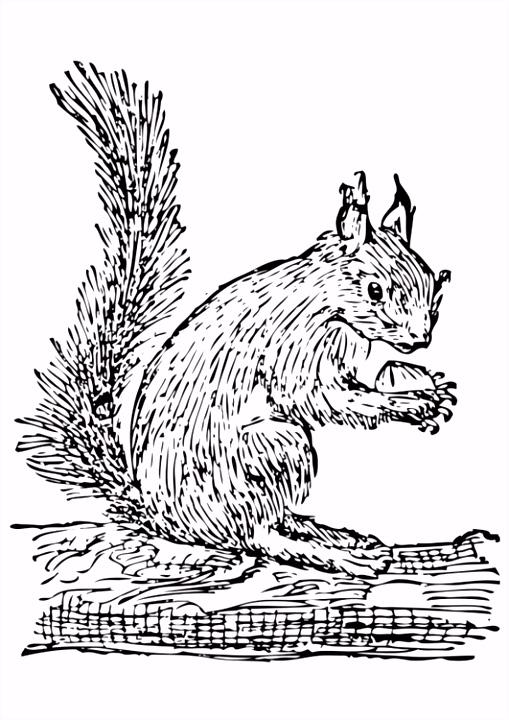 Kleurplaat eekhoorn Afb