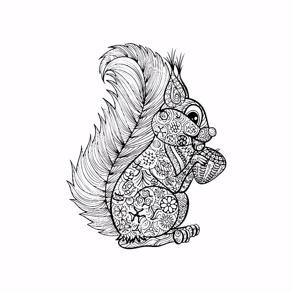 Leuk voor kids – eekhoorn