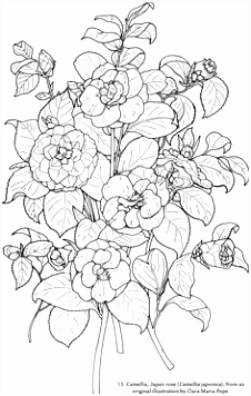 Wonderful Cherry Blossom and Birds Coloring Page A Preview from the