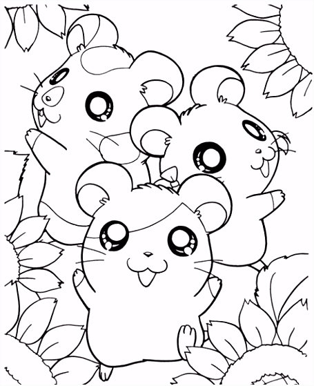 Hamster Coloring Pages Dwarf Hamster Coloring Page