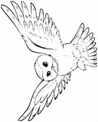 Resultado de imagem para coruja harry potter desenho