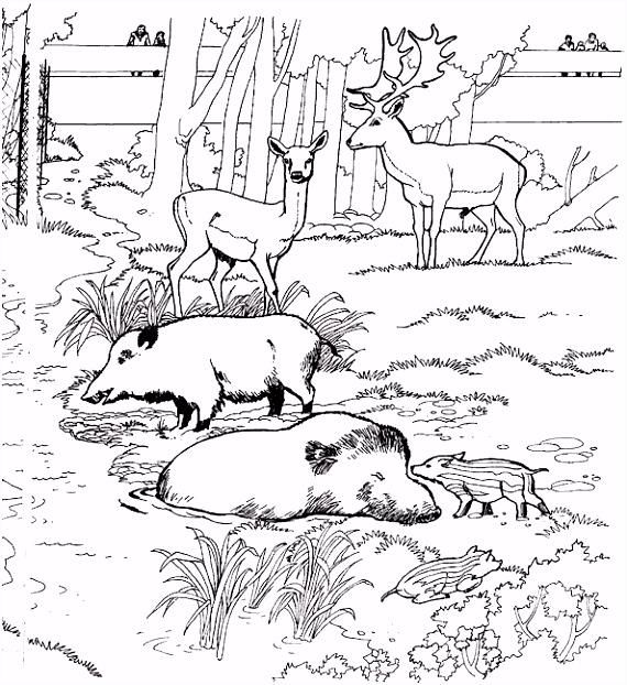 Herten Kleurplaat Animaatjes