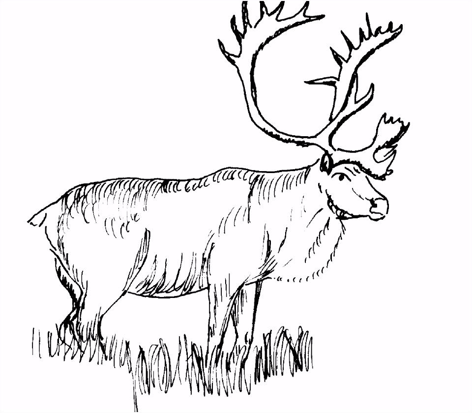 kleurplaten ren herten kleurplaten ren hert tekeningen