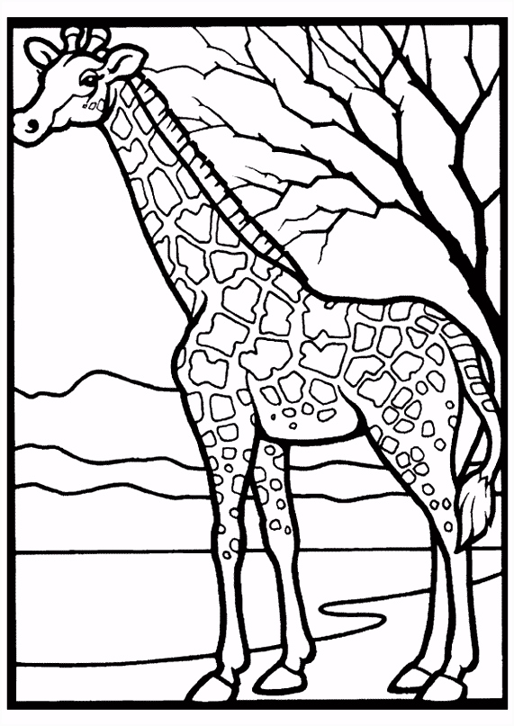 Kleurplaat Giraffen 6539