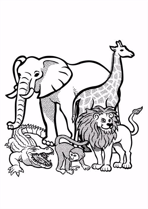 Kleurplaat ren in het wild Afb
