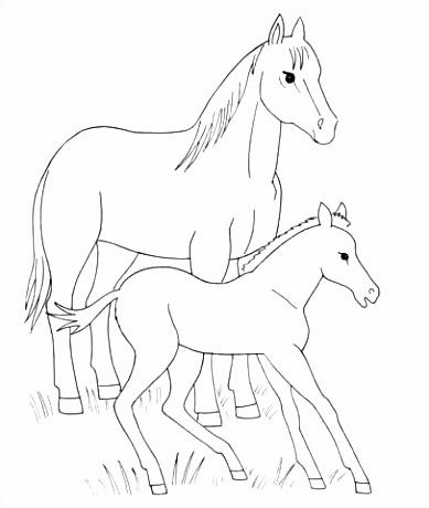 Paard en veulen kleurplaat