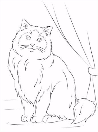 Ragdoll kat kleurplaat