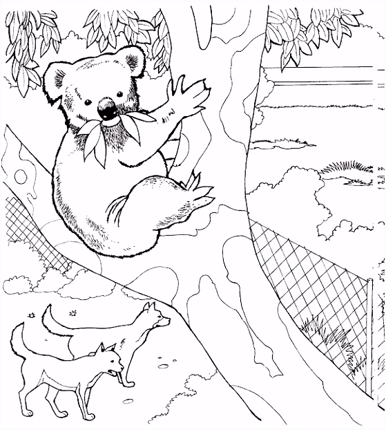 kleurplaten en zo Kleurplaat van Koala beer wolven