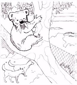 Kleurplaten van Koala beertjes JouwKleurplaten