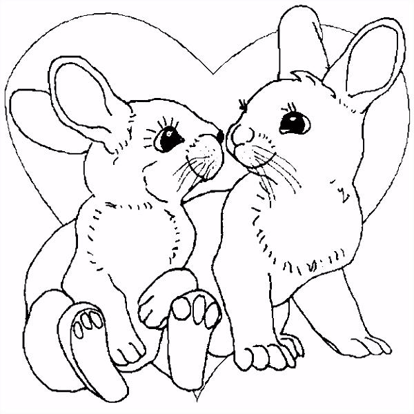 K valentijn konijn