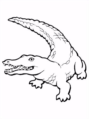 Levensechte krokodil kleurplaat