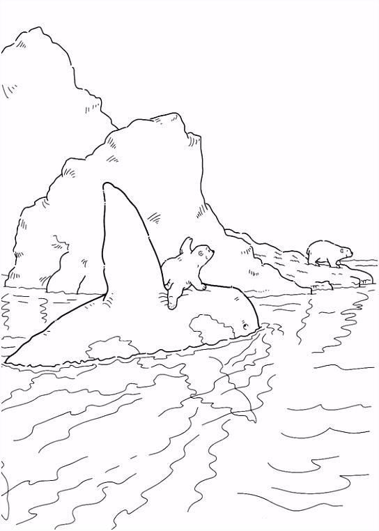 Kleurplaten Lars De Kleine Ijsbeer Kleurplaten En Zo Kleurplaat Van Kleine Ijsbeer Met orca C2yt70vau0 Z4ds5uwtnm