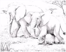 548 beste afbeeldingen van Elmer olifanten Preschool Elephants