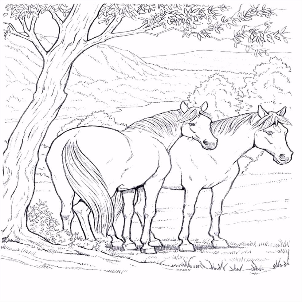 Geweldige Kleurplaten Hard Geweldige Wilde Paarden Kleurplaten