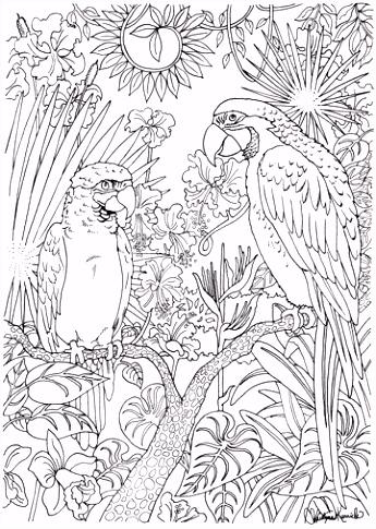 Volwassen kleurplaten papegaaien inkleuren