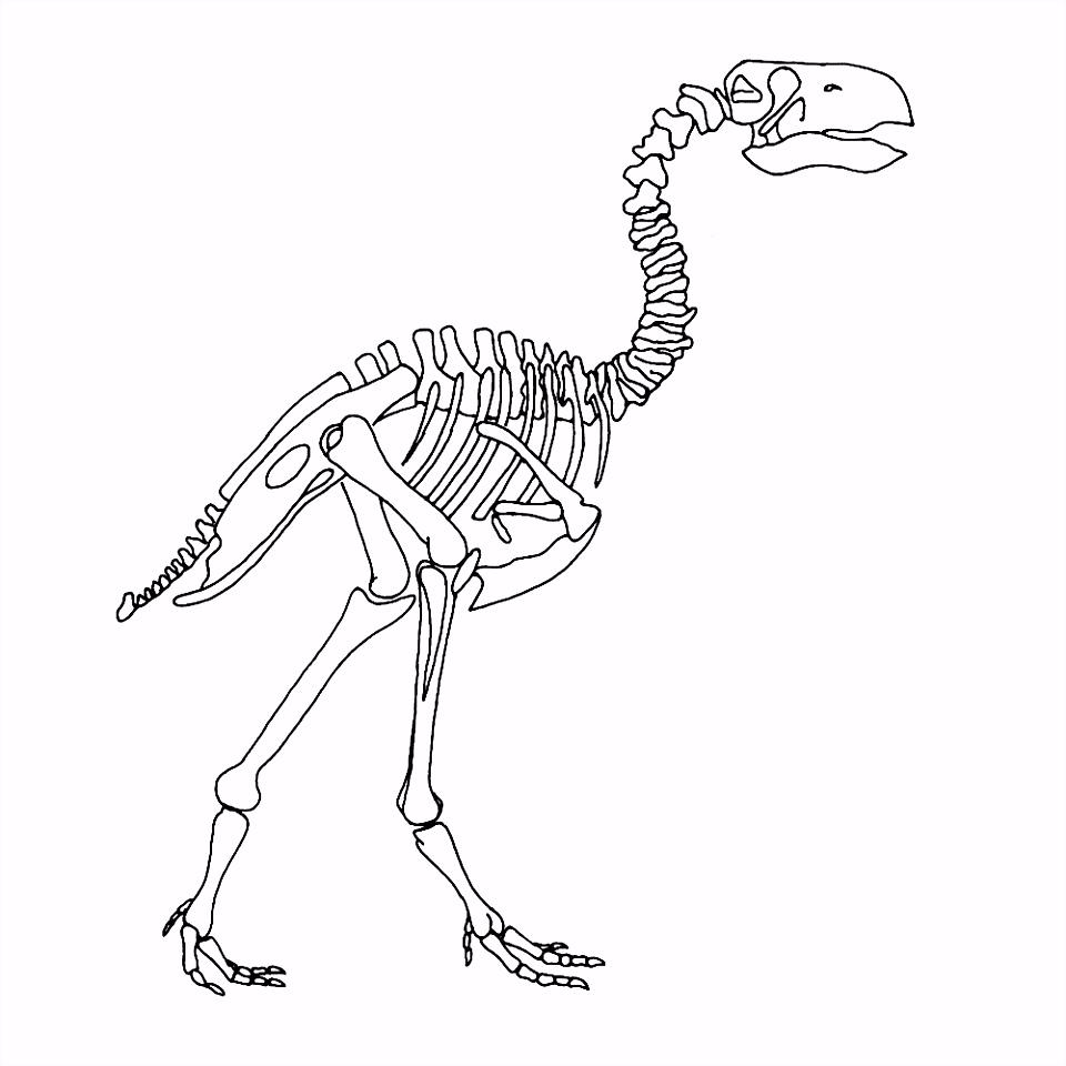 dino skelet kleurplaat Google zoeken Thema dino s