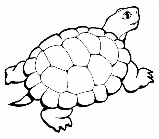 Dieren kleurplaten schildpad