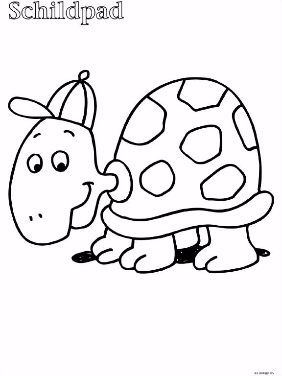 8 kleurplaten schildpad sletemplatex1234