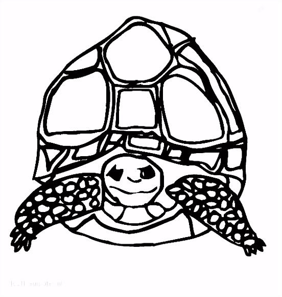 1001 KLEURPLATEN Dieren Schildpad Kleurplaat Schildpad