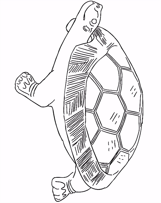 Kleurplaat Kleurplaat schildpad 2418