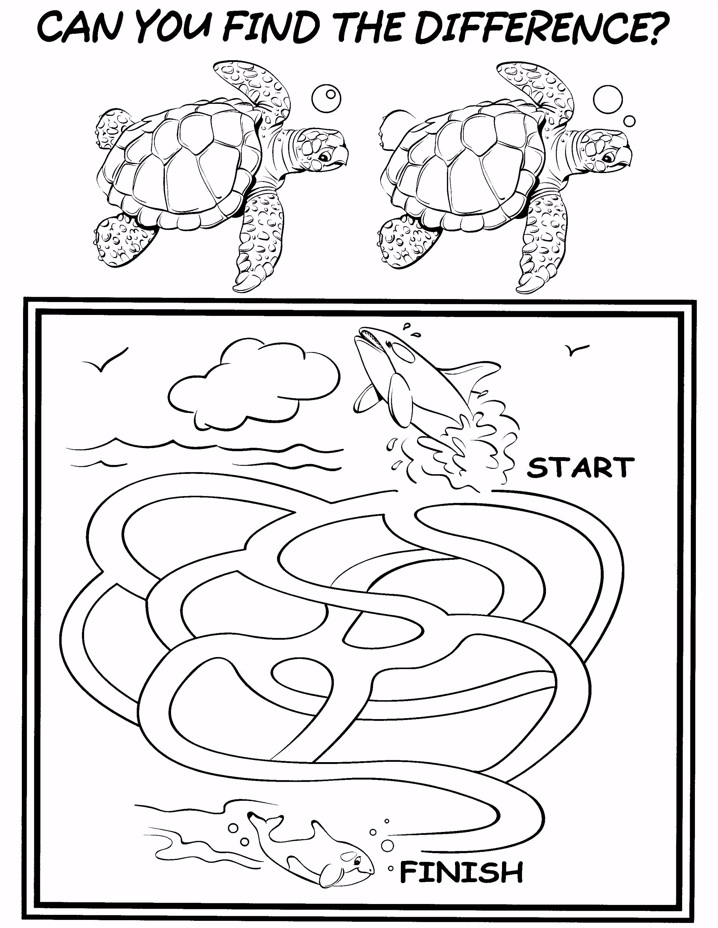 Kleurplaten Paradijs Kleurplaat Schildpad