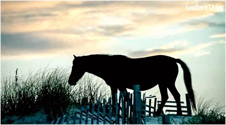 Help at hand for hurricane hit horses in US Horsetalk