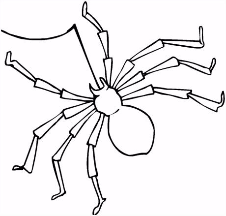 Spin met lange poten kleurplaat