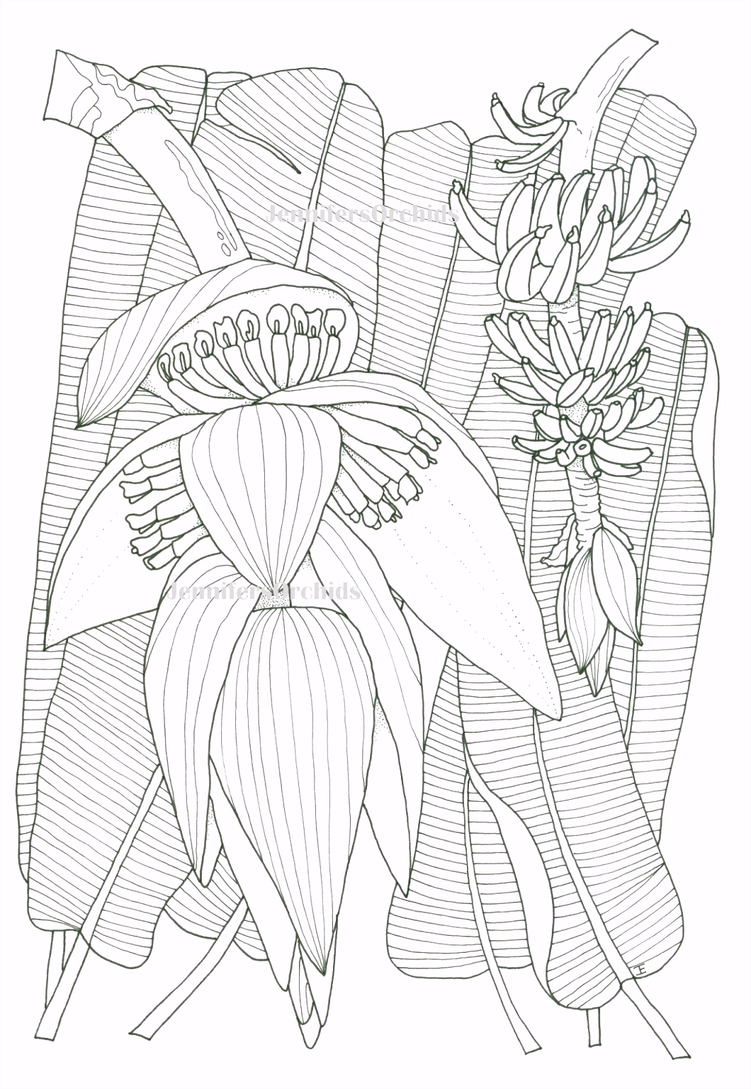 Schilderijen van Orchidee n & andere botanische werken 2017