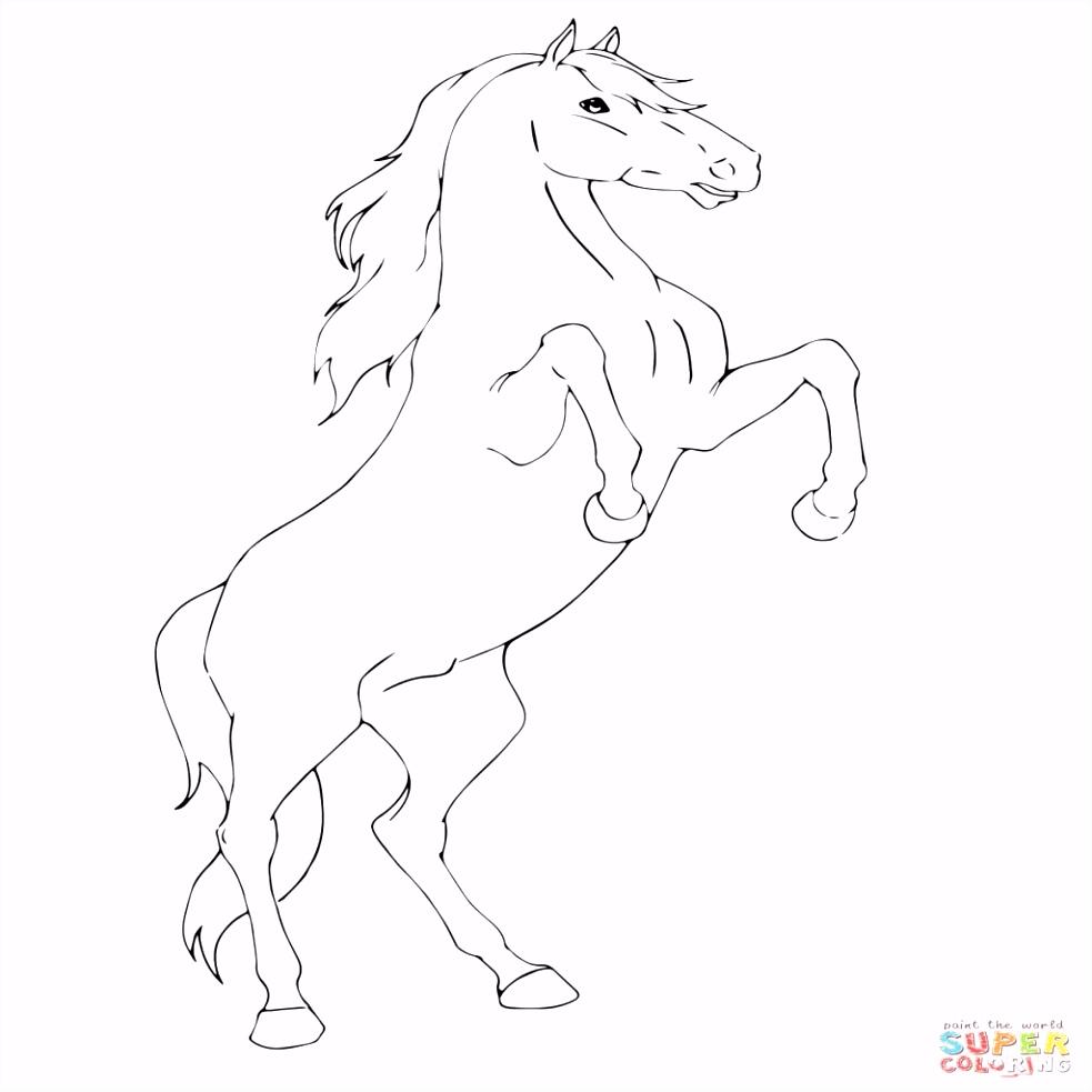 Kleurplaten Van Paarden Nieuw Paarden Kleurplaten Fries I3nf14kbn4 E6yw66uqvu