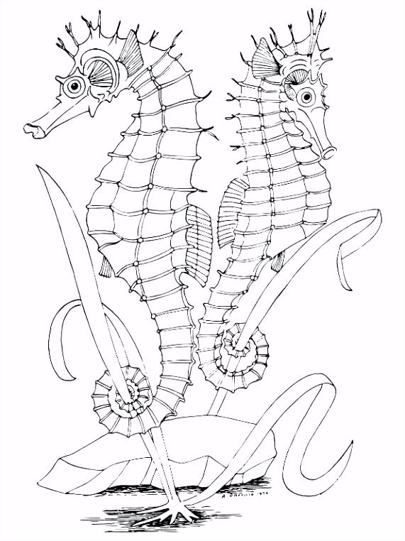 Zeepaardje Kleurplaten Paarden Kleurplaten Voor Volwassenen