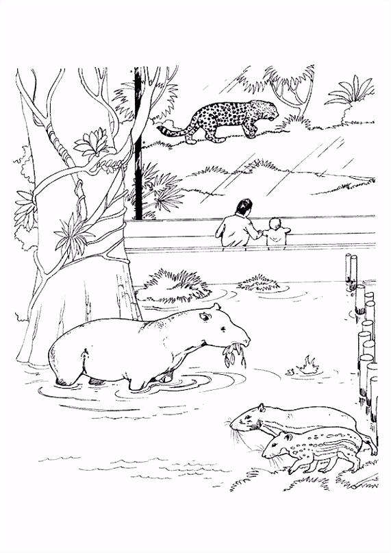 Kleurplaat Zoo rentuin 7126