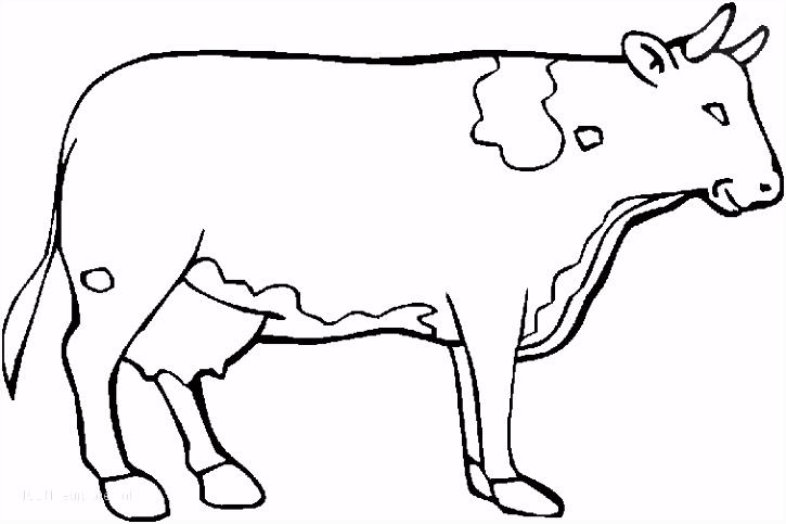 1001 KLEURPLATEN Dieren Koe Kleurplaat Koe